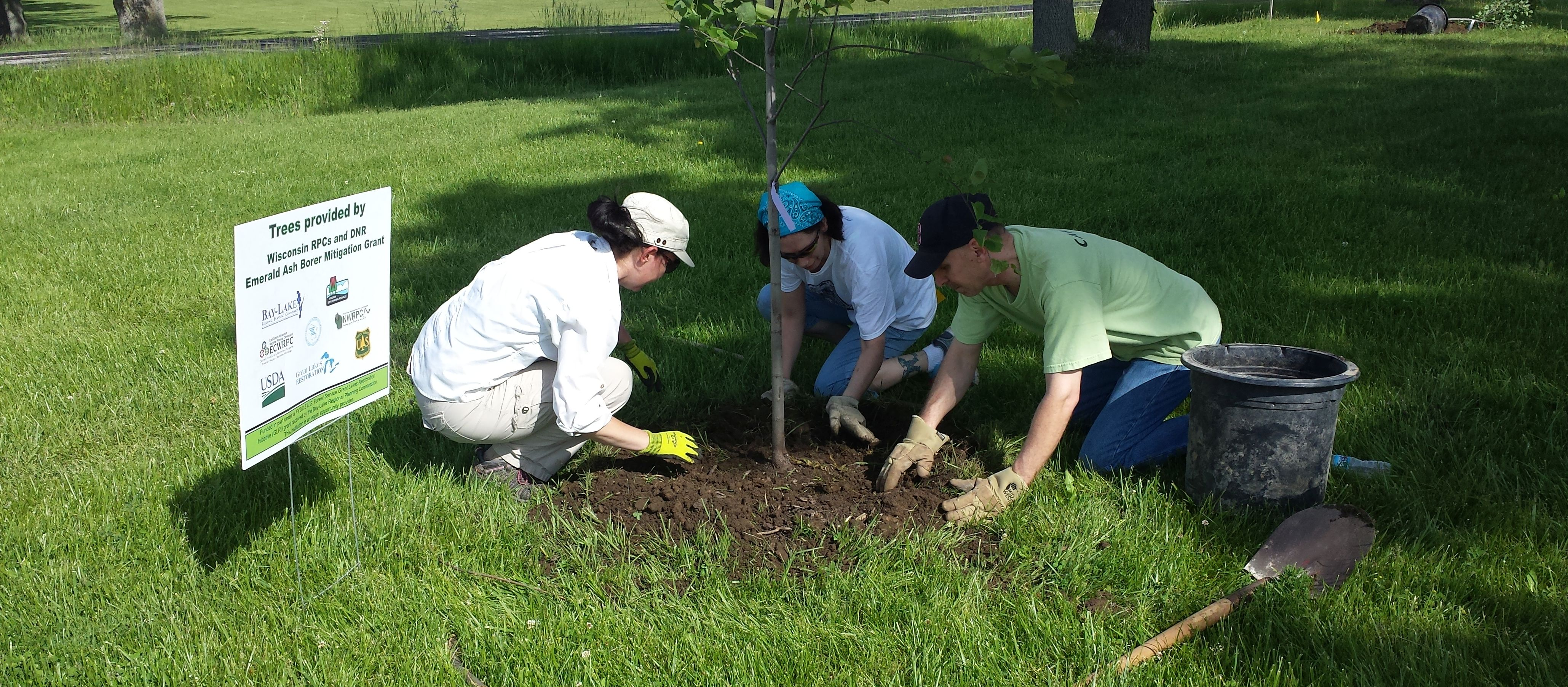 2019 wi rpcs and dnr tree planting grant program bay lake region